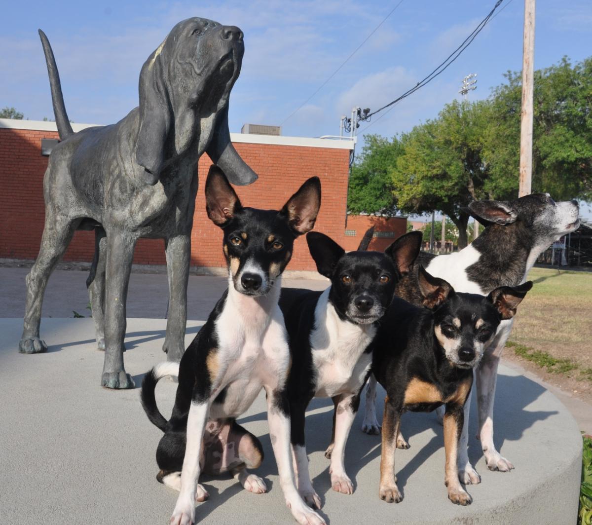 4wbloodhound